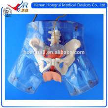 Modelo ISO de alta calidad para cateterización uretral