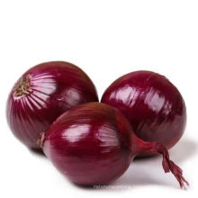 Red onion fresh in bulk with best price