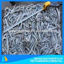 fish feed frozen sand lance supplier