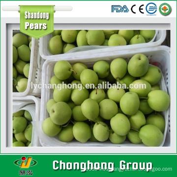 Shandong pera / Corea pera / fruta fresca exportadores China