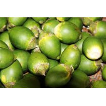 Areca Nut Extract CAS #: 63-75-2