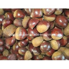 2015 Sélectionnez Chestnut Fresh (40-50)