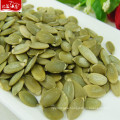 Hight quality wholesale new pumpkin seeds raw