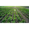 Fertilizante soluble en agua con extracto vegetal y ácido húmico