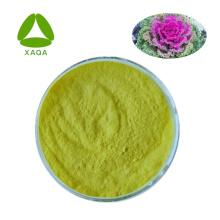 Kräuterextrakte Grünkohlextraktpulver