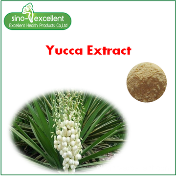 Yucca-extract