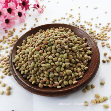 2021 new crop Chinese dry green lentils