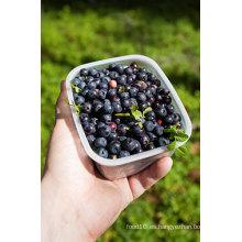 IQF Congelación Blueberry Orgánico -160002