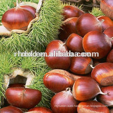 Chinese organic roasted chestnut on sale