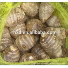Chinese fresh taro 40g to 120g