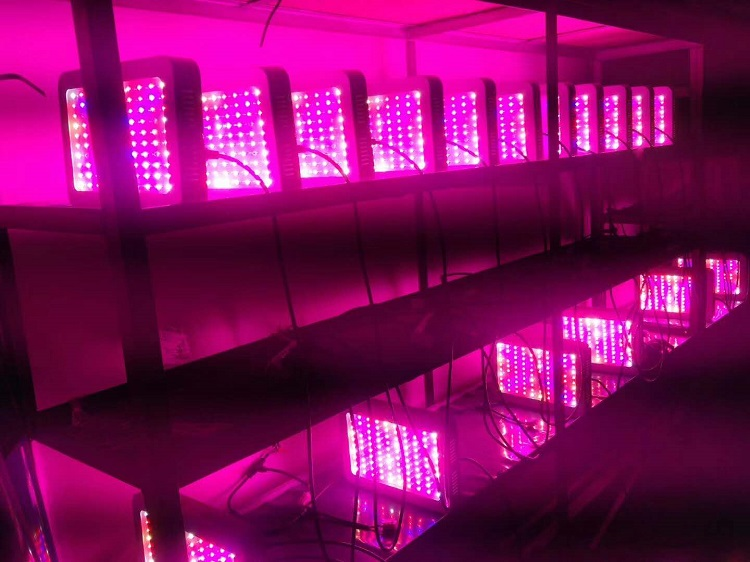 grow light for lowes