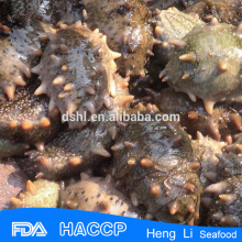 HL011 Rich Nutrition Frozen Sea Cucumber