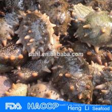 Salud mariscos Pepino de mar