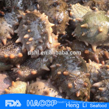 Saúde frutos do mar pepino do mar