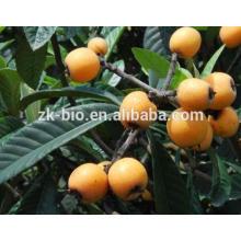 Конкурентоспособная цена экстракт листьев Мушмула, экстракт Урсоловая кислота