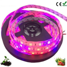 DC12V SMD 5050 led plant grow light strip for Greenhouse Hydroponic Plant Growing