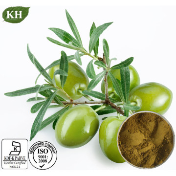 Anti-Câncer para extrato de folha de oliva Hydroxytyrosol 20%