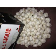 Alho branco puro fresco
