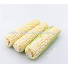 NCO05 Сиху Гуанчжоу высокий урожай качественных гибридных семян кукурузы