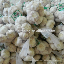 Ail chinois frais du fournisseur de l'ail de la Chine