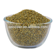 High quality green broom corn millet , bajra green millet for sale with reasonable price and fast delivery !!
