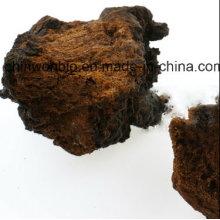 Diabète Santé Alimentaire Phaeoporus Obliquus Chaga Poudre de champignons