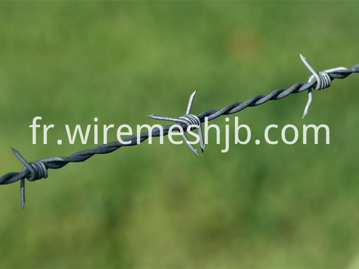 Barbed Wire Line