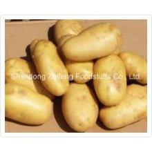 Pomme de terre jaune fraîche de haute qualité