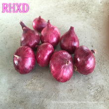 2017 onion importers malaysia