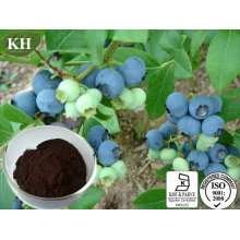 Bilberry Extract for Anthocyanin Vaccinium Myrtillus Anthocyanidin 25%