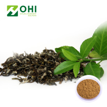 Poudre de polyphénols de thé d'extrait de thé vert