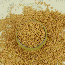 Price Of Yellow Broomcorn Millet