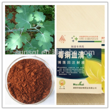 Factory 100% Natural Anti-diarrhea Pink Plumepoppy Extract 60% Total alkaloid CAS112025-60-2