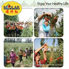 Medlar Organic Herbs Goji Plants
