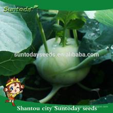 Suntoday acheter des graines de jardin en ligne heirloom vert légume hybride F1 bio graines de chou-rave catalogue (22001)