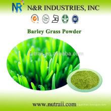 Polvo orgánico de hierba de cebada en polvo verde