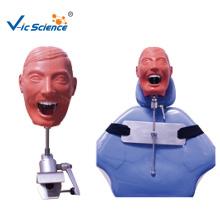 Medizinisches zahnmedizinisches Phantomkopfmodell für Krankenhausschule