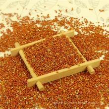 Mejor mijo rojo puro en cáscara, origen chino