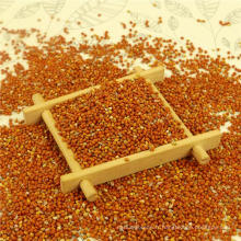 Best Pure red millet in husk,Chinese origin