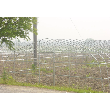Terowong Poli Green House Greenhouse Tunnel Vegetable For Tomato