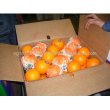 Fresh Orange ( Season 2016 )