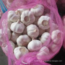 Alho branco fresco de origem para seu armazém