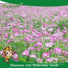 Suntoday японцы используют травы в качестве удобрения для риса овощей фруктов органический китайский козлятника семена(81006)