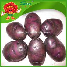 Almacenamiento en frío para patata dulce púrpura