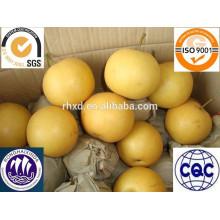 Китай свежий Хоши производитель груша