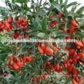 2017 certified organic bulk goji berries wholesale goji berry