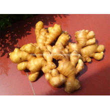 Good quality fresh fat ginger