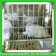 Cages grossières de lapin