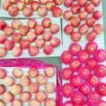 свежий Шаньдун Яньтай бумажный пакет Фудзи яблоки