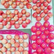 shandong frais yantai sac en papier pommes fuji
